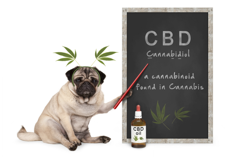 Where to Get CBD Oil for Your Dog